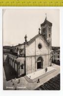 SARZANA Cattedrale FG NV  SEE 2 SCANS Animata - Otras Ciudades