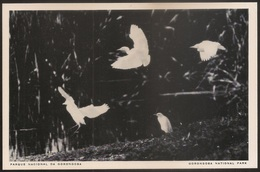 Postal Moçambique - Parque Nacional Da Gorongosa - Garça Carraceiras - Caltle Egrets - National Park - CPA - Postcard - Mozambique