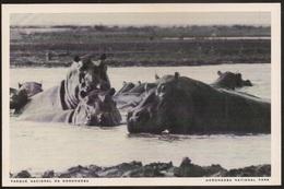 Postal Moçambique - Parque Nacional Da Gorongosa - Hipopótamos - Hippopotamus - National Park - CPA - Postcard - Mozambique