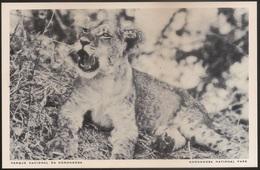 Postal Moçambique - Parque Nacional Da Gorongosa - Leãozito - Lion Cub - National Park - CPA - Postcard - Mozambique