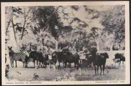 Postal Moçambique - Parque Nacional Da Gorongosa - Bois-Cavalos E Zebra - Wildbeests - National Park - CPA - Postcard - Mozambique