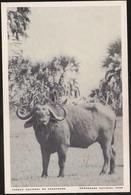 Postal Moçambique - Parque Nacional Da Gorongosa - Búfalo - Buffalo - National Park - CPA - Postcard - Mozambique