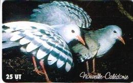 Phonecard Telecarte Nouvelle Caledonie Noumea  NC101 Oiseau Cagou Parc Forestier Cote 5 Ut TB - New Caledonia