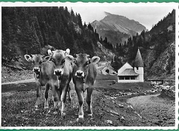 ! - Liechtenstein - Steg Im Fürstentum Liechtenstein - Liechtenstein