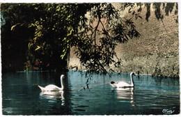 Le Quesnoy, Les Cygnes Du Lac Vauban (pk48277) - Le Quesnoy