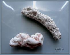 2 Fragments De Corail Fossilisés - Fossiles