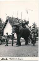 LAOS - Carte Photo - Eléphants, Sentinelles Royales - Laos