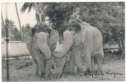 LAOS - Carte Photo - Eléphants Royaux - Laos