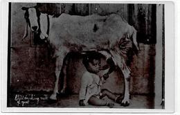 CPA Inde India Britannique Anglaise Non Circulé Type Ethnic Carte Photo RPPC Chèvre - India