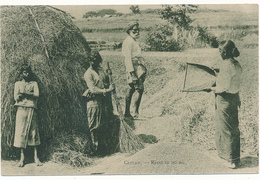 CEYLON - Récolte Du Riz - Sri Lanka (Ceylon)