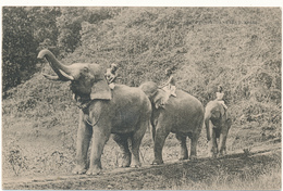 CEYLON - Elephants Dans Les Jungles - Sri Lanka (Ceylon)