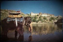 Ambert Fort - Jaipur - Rajasthan - Inde . - India