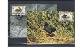 Tristan Da Cunha Michel Cat.No. Maxi Cards 513/516 Birds - Tristan Da Cunha