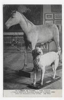(RECTO / VERSO) MUSEE DE L' ARMEE - N° 14 - CHEVAL VIZIR ET CHIEN DE NAPOLEON - CACHET INTER ARMA CARITAS - CPA - Museums