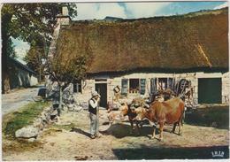 Région : Auvergne- Limousin : Vache , Ferme  , Attelage - Auvergne