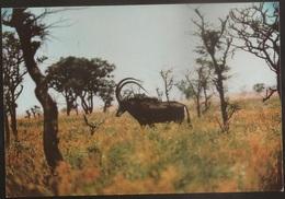 Postal Moçambique - Gorongosa - Palanca Preta Gigante - Giant Sable Of Angola - African Wildlife Series - CPA - Postcard - Mozambique
