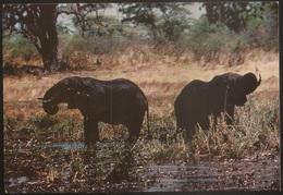 Postal Moçambique - Gorongosa - Elefante - Elephant D'Afrique - African Wildlife Series - CPA - Postcard - Mozambique