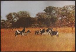 Postal Moçambique - Gorongosa - Zebra De Chapman - African Wildlife Series - CPA - Postcard - Mozambique