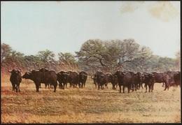 Postal Moçambique - Gorongosa - Bufalo Do Cabo - Cape Buffalo - African Wildlife Series - CPA - Postcard - Mozambique