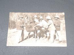 MADAGASCAR - Carte Postale - Éleveurs D' Autruches - L 19471 - Madagascar