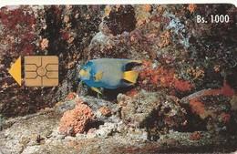 ANIMALI PESCI HOLACANTUS CLIARIS PEZ AZUL REY VENEZUELA CARD - Pesci
