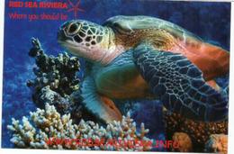 Turtle Of The Red Sea, Sharm El Naga (Hurghada) , Mint Uncirculated Postcard - Hurghada
