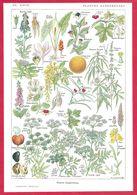 Plantes Dangereuses, Illustration Maurice Desssertenne, Larousse Médical 1934 - Other