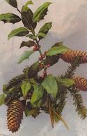 AK Tannen Und Stechpalmen - Feldpost Mun. Kol. 3. Battr. Fußa. Btl. 63 - 1918 (35275) - Botanik