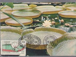 BOTANICAL GARDEN OF UNIVERSITIES MAXIMUM CARD ROMANIA 1985,  SPECIAL CANCEL Botanical Garden  CLUJ-NAPOCA - Vegetales