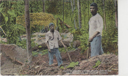 Natives Digging Ancient Indian Graves For Gold, Ornaments And Pottery - Panama - Panama