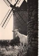 Chèvres Animaux Chevreau Cabris Bouc La Chèvre De Monsieur Seguin Moulin à Vent - Animales