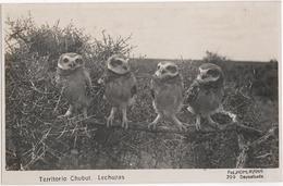 Territorio Chubut. Lechuzas - & Bird - Argentine