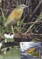 ARDEOLA RALLOIDES BIRDS, MAXICARD,MAXIMUM CARD,2012 ROMANIA. - Marine Web-footed Birds