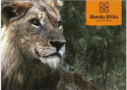 Bienvenue Afrika ! Akwaba Afrika ! ,   Mint Uncirculated Postcard - Lions