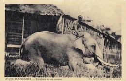 """CP  INDES FRANCAISES - ELEPHANT ET SON CORNAC - COLLECTION """"POUR L'ENSEIGNEMENT VIVANT""""  / 1 - India"""