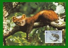Irland 1992  Mi.Nr. 799 , Pine Marten (Der Edelmarder) - WWF Maximum Card - First Day 9.VII.1992 - Cartoline Maximum