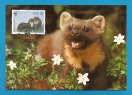 Irland 1992  Mi.Nr. 798 , Pine Marten (Der Edelmarder) - WWF Maximum Card - First Day 9.VII.1992 - Cartoline Maximum
