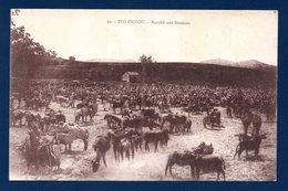 Algérie. Tizi Ouzou. ( Kabylie). Marché Aux Bestiaux - Tizi Ouzou