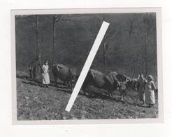 PHOTO EPOQUE ARGENTIQUE 1938  A LA CAMPAGNE AVEC LE TROUPEAU DE VACHES AU CHAMP Vache Bovin - Lieux
