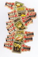 24 Cigar Bands Taf Mushrooms Champignons +Taf Issued 1975 - Cigar Bands