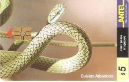 Nº 87 TARJETA DE URUGUAY DE UNA CULEBRA ARBOLICOLA (SNAKE) - Non Classificati