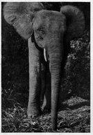 CARTE POSTALE.CONGO FRANCAIS.ANIMAL.ELEPHANT.PUBLICITE IONYL PLASMARINE. Achat Immédiat - Congo - Brazzaville