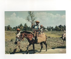 "Carte Postale N° 7941  "" Retour De Marché "" , Neuve - Haïti"