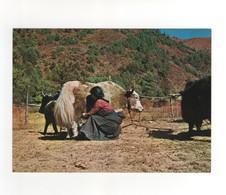 "N° 40  "" Sherpa Girl And Yak "" , Neuve - Népal"