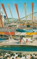 CARTE POSTALE ORIGINALE DE 9CM/14CM : THE SEA CIRCUS PACIFIC OCEAN PARK SANTA MONICA CALIFORNIA USA - Los Angeles