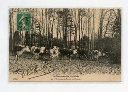La Normandie Illustrée . Troupeau De Bœufs Au Pâturage . Normandy Illustrated. Herd Of Oxen At Pasture - Allevamenti