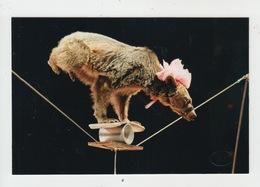 CIRQUE / OURS DE KOLODENKO Sur UN FIL - 1993 - Cirque