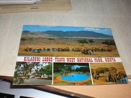 Kilaguni Lodge Tsavo West National Park Kenya - Kenya