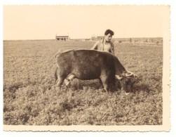 Petite Photographie Homme Et Vache Dans Un Pré - Anonieme Personen