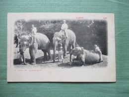 CPA SRI LANKA CEYLON TRIO OF ELEPHANTS - Sri Lanka (Ceylon)